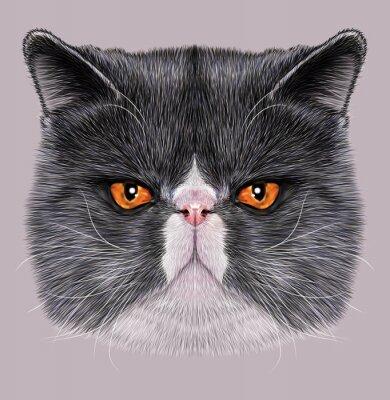 Obraz Przykładami Portret Maine Coon. Śliczne dwukolorowa kota domowego z zielonymi oczami.