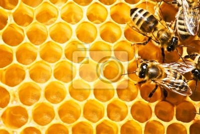 pszczół na honeycells