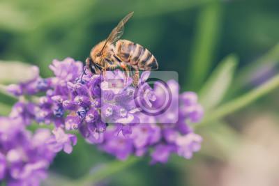 Obraz Pszczoła na lawendzie