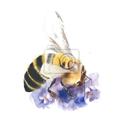 Pszczoła zbierająca nektar akwarela ilustracji samodzielnie na białym tle