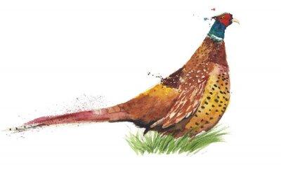 Ptak bażant gra ptaka akwarela ilustracji samodzielnie na białym tle