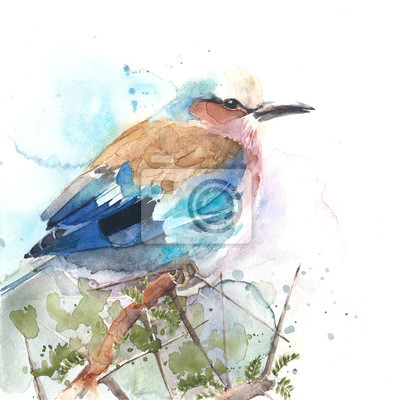 Ptak kolorowe roller akwarela ilustracja piórko ptaka na białym tle