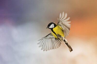 Obraz ptak mucha rozprostowanie skrzydeł na niebie o zachodzie słońca