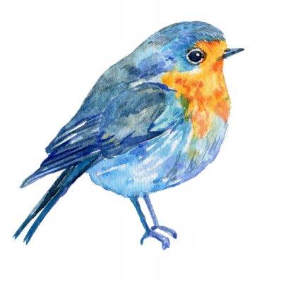 Obraz ptak na białym tle .illustration akwarelą