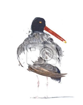 Ptak nad morzem amerykański ostrygojad akwarela ilustracji samodzielnie na białym tle