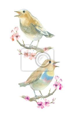 Ptaki akwarela. Nightingale na gałęzi z kwiatami.