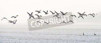 Obraz Ptaki latające nad snowy polu w zimie