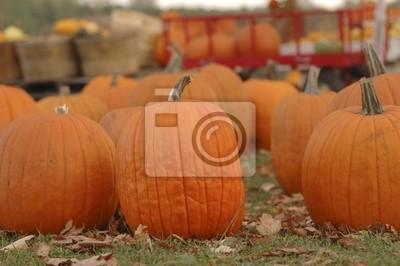 Pumpkins na sprzedaż