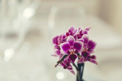 Obraz Purpurowy kwiat w rozkwicie na kremowo białym tle