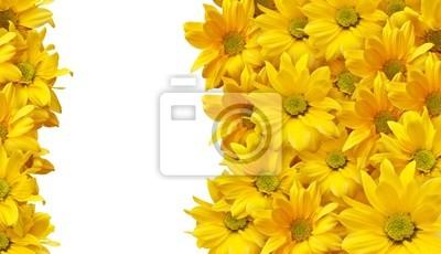 puste wizytówki, close-up view of Daisy
