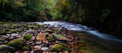 Obraz Rain forest steam