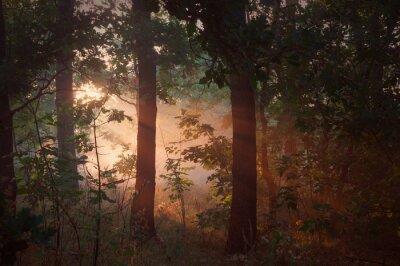 Obraz Rano mgła w lesie