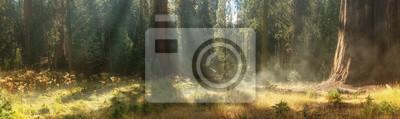 Obraz Rano w Parku Narodowym Sekwoi, USA