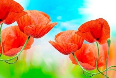 Obraz Red Poppy bliska