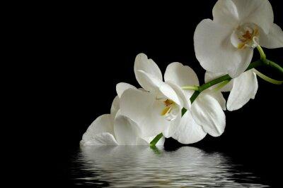 Obraz refleksja kwiaty orchidei