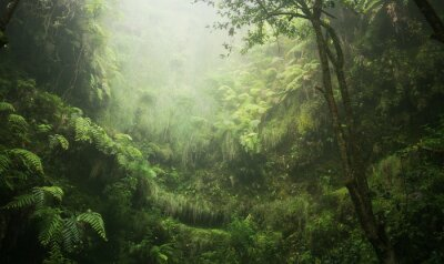 Obraz Regenwald tropisch nass abenteuer