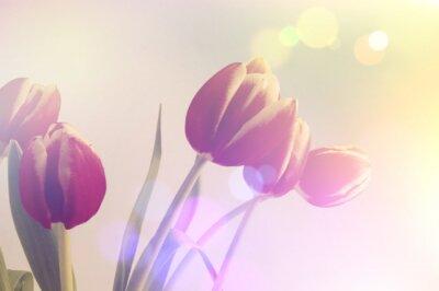 Obraz retro tulipany