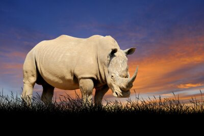 Obraz Rhino na tle nieba słońca