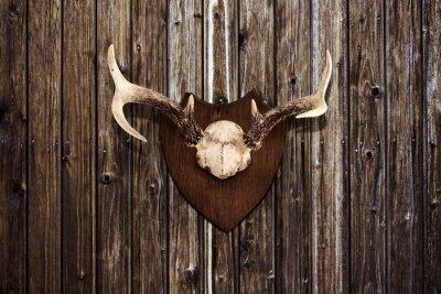 Obraz Rogi na drewnianej ścianie