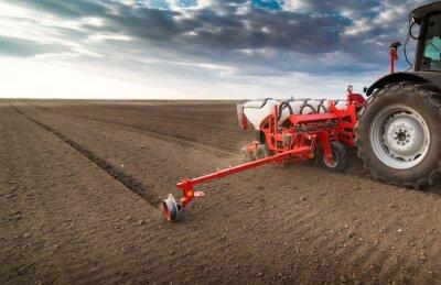 Obraz Rolnik z ciągnikiem siewnym - uprawa siewu na polu rolnym wiosną