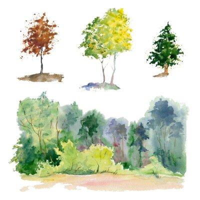 Rośliny akwarelowe (las, Gaj, drzewo).
