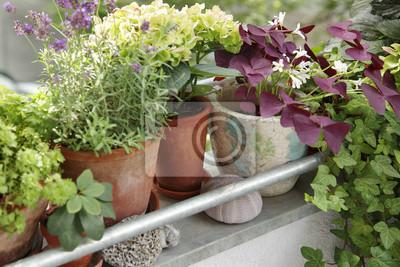 Obraz Rośliny balkonowe