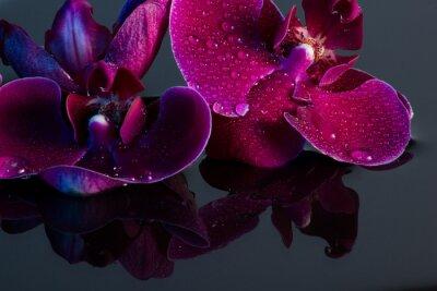 Obraz Rote Orchidee mit wasserspiegelung und wassertropfen