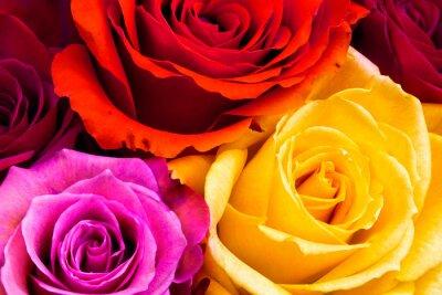 Obraz róże w tle