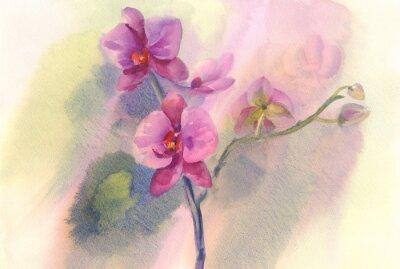 Obraz różowa orchidea oddział akwarela backgroung