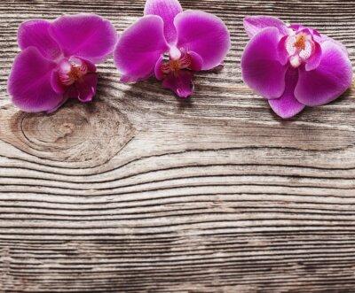 Obraz Różowe kwiaty orchidei na drewnianym tle