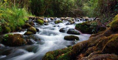 Obraz ruisseau de montagne