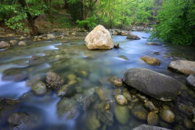 run of mountain stream in forest