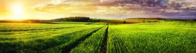 Obraz Rural landscape sunset panorama