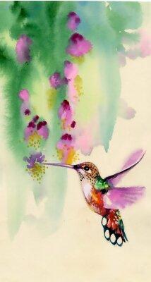 Rysunek colibri ptaków i kwiatów