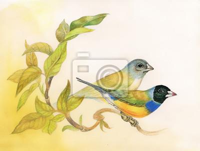 Rysunek pięknych jasnych ptaków na gałęzi