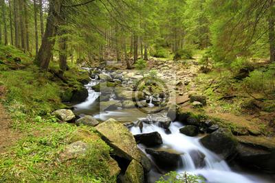 Rzeka górskich w zielonym lesie
