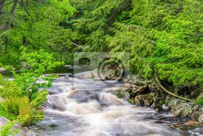 Rzeka Rosseau Rzeka