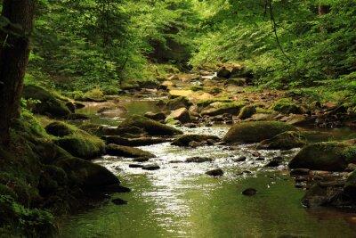 Obraz rzeki w lesie