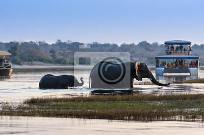 Samica Słoń afrykański i jego cub przekraczania Chobe rzeki w Chobe National Park z łodzi turystycznych w tle; Koncepcja podróży w Botswanie i Safari