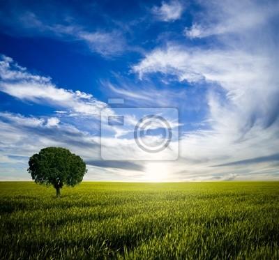 Samotne drzewo o wschodzie słońca