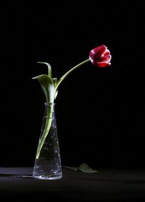 Obraz Samotny tulipan