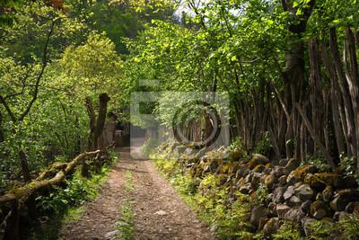 Scenic uliczka wsi w lecie