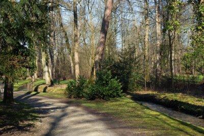 Obraz Ścieżka i mały strumień w lesie