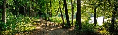 Obraz ścieżka w lesie