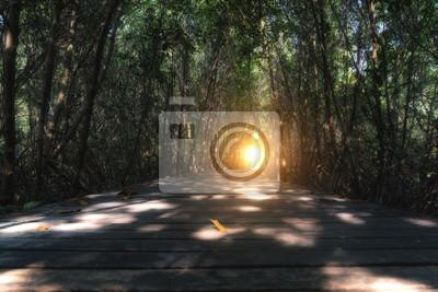 Ścieżka w lesie mangrowe z sunlight na drzewie tunelu w Tajlandii.
