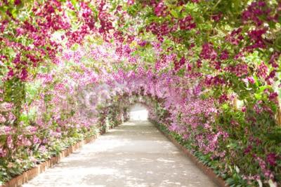 Obraz Ścieżka w ogrodzie botanicznym z orchidei okładzin hamulcowych ścieżki.