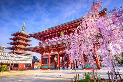 Obraz Sensoji Temple w Asakusa, Tokio, Japonia