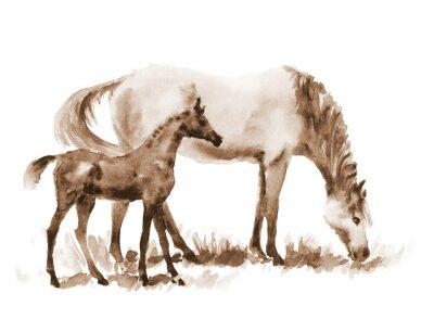 Obraz Sepia klacz i źrebię akwarela na białym tle. Piękne ręcznie malowane ilustracji dwóch koni na polu.