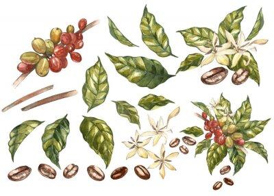 Obraz Set Czerwone kawowe arabica fasole na gałąź z kwiatami odizolowywającymi, akwareli ilustracja.