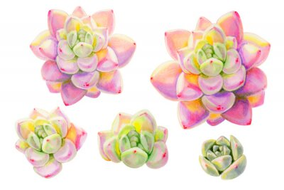 Set of beautiful colorful succulents.  Decorative plants. Floral print. Marker drawing. Watercolor painting. Beautiful houseplants. Greeting card. Flower painted background. Hand drawn illustration.